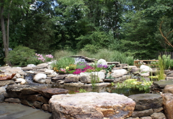 A natural water feature with plantings creates a beautiful landscape design
